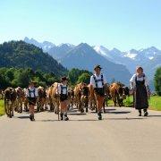 Viehscheid - das Ende des Alpsommers