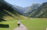Wanderung Trettachtal